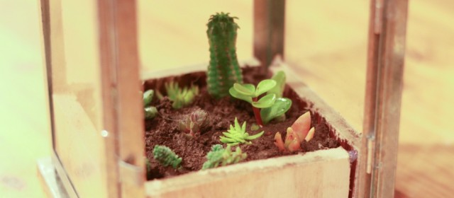This Succulent Lantern Planter DIY involves Ikea, free things, and succulents—what could be better? A complete How-To is included.