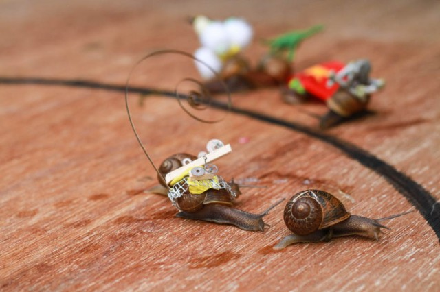 Snail Racing Game : Decorate some racing snails!