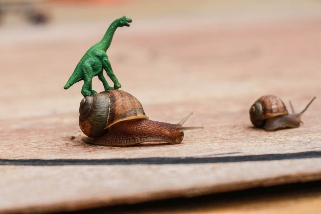 Snails Racing : Decorate snails and do some snail races!