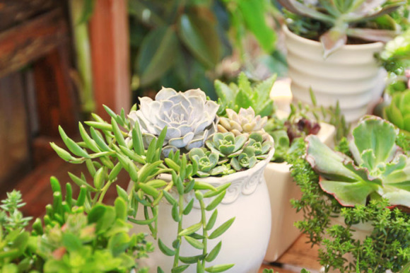 Succulent centerpieces for a wedding