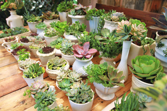 Wedding succulent centerpieces