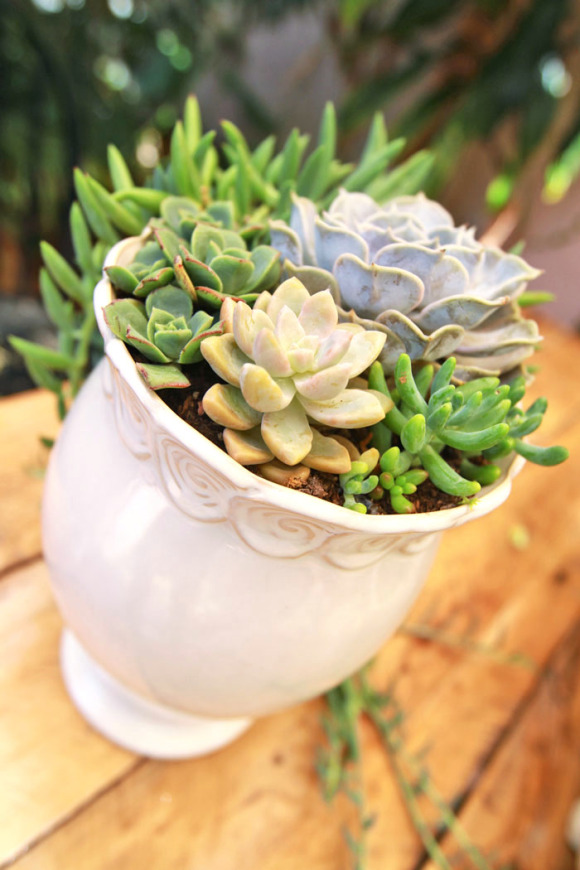 Wedding Succulent Centerpieces - DIY
