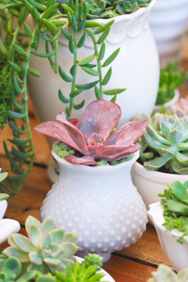 wedding succulents centerpieces featured